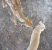 Un chat et un faon sauvage se câlinent