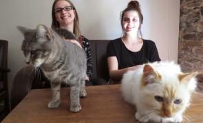 Nantes reçoit son premier bar à chats «Le chat l'Heureux»