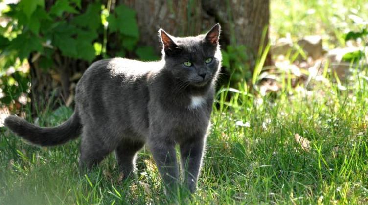 Yeux, nez et oreilles du chat : comprendre leur fonctionnement