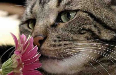 chat qui sent une fleur