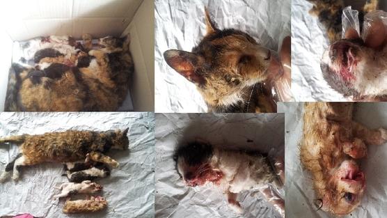 une chatte errante recueillie avec ses 4 chatons