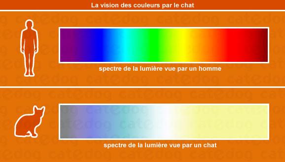 vision des couleurs par le chat
